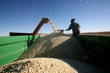 SA and Zambia expect their second-largest maize harvests