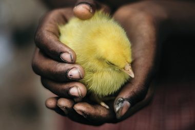 Animal agriculture in Africa: Forecasting the future