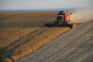 South Africa's Soybean Success Story